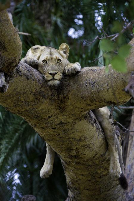 Zambia Authentic Safari
