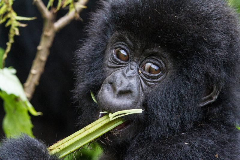 Primate & Birding Adventure