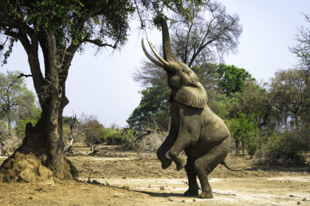 Zimbabwe Wild and Remote