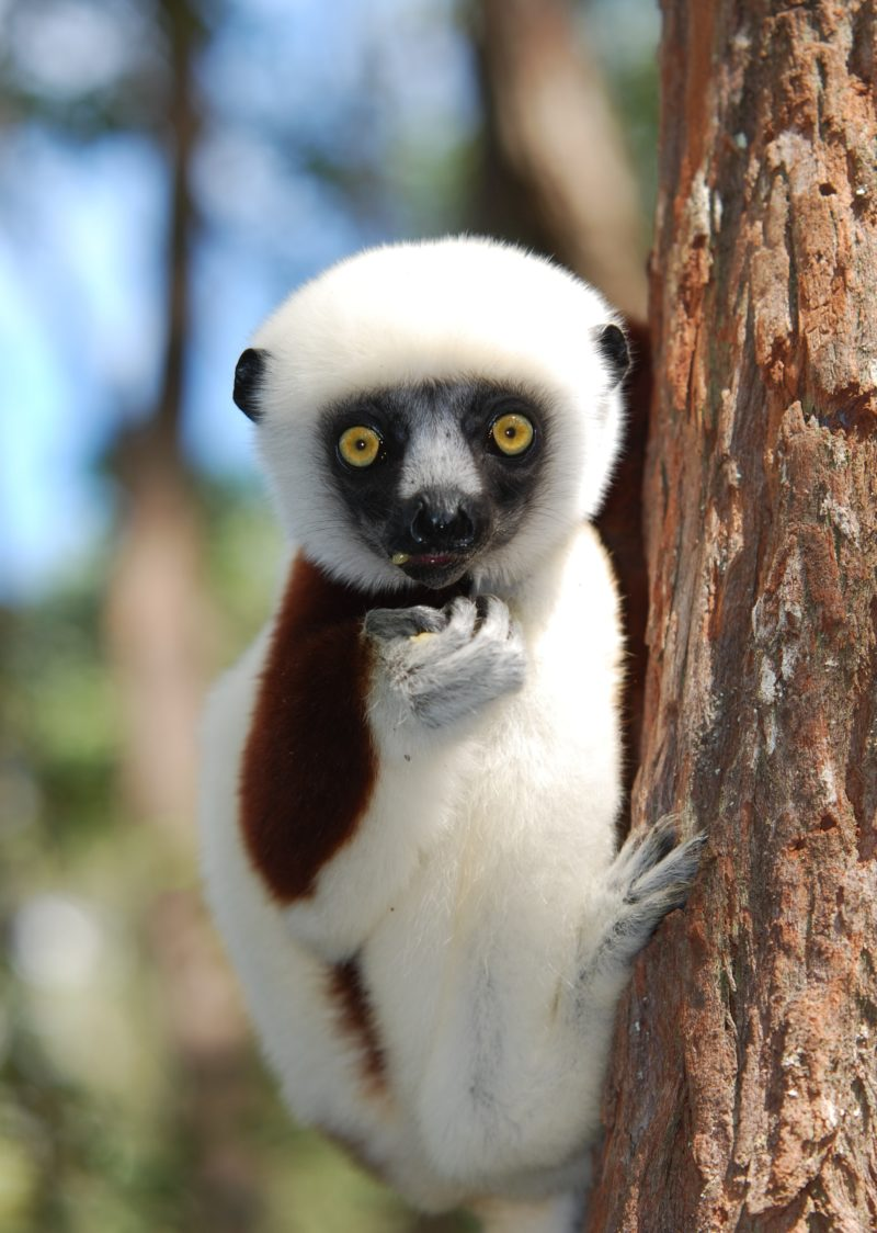 Madagascar Lost World Discovery